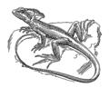 Basilisk (PSF).png