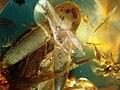 Batic amber Coleoptera Elateridae 2 - spread Elytra.JPG