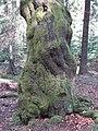 Baum am Rennsteig - panoramio.jpg