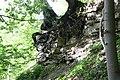 Baumwurzeln klammern sich an Muschelkalk. Simmelsberg, Hessische Rhön.jpg