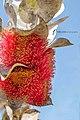 Beauty in Western Australia.jpg