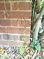 Benchmark on ^5 Iffley Turn - geograph.org.uk - 2113531.jpg
