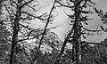 Bergtocht van S-charl naar Alp Sesvenna. 10-09-2019. (actm.) 34.jpg