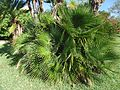 Bermuda (UK) image number 246 foliage.jpg