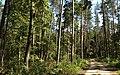 Bike trail between Grabacz and Kopaniarze - panoramio (5).jpg