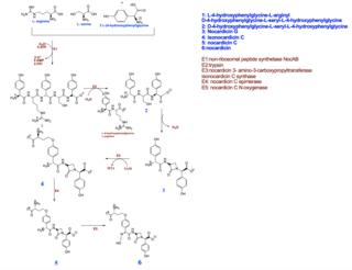 Nocardicin A chemical compound