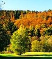 Birches - panoramio (4).jpg