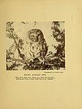 Bird legend and life (1908) (14568725468).jpg