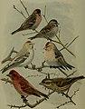 Bird lore (1914) (14569026869).jpg