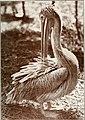 Bird notes (1913) (14563616267).jpg