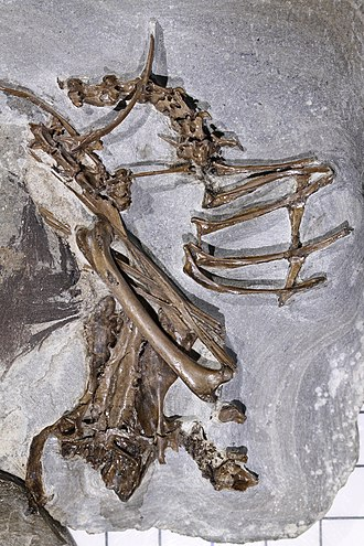 Fur Formation - Image: Bird skeleton December 019
