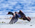 Birds forsythenwr (17729913122).jpg
