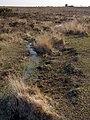 Black Gutter at the head of Black Gutter Bottom, New Forest - geograph.org.uk - 386835.jpg