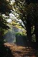 Blackford Pond Rays (22764968071).jpg