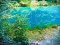 Blautopf Blaubeuren (24045687601).jpg