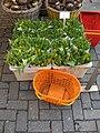 Bloemenmarkt 2008 (2).jpg