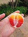 Blood orange Israel.jpg