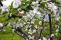 Blossom (038117839).jpg