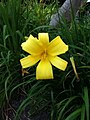 Blossomed Yellow Flower.jpg