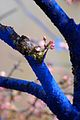 Blue Tree With Blossom Bud Dimopoulos.jpeg