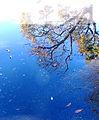 Blue elixir (3156956367).jpg