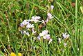 Blume in Wildbad 02.jpg