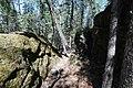 Bonsai Boulders Kananaskis Alberta Canada (26888727426).jpg