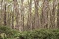 Bosques de Lengas Reserva Nacional Magallanes 06.jpg
