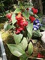 Botanička bašta Jevremovac 057.JPG