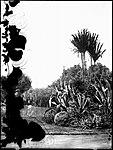 Botanic Gardens, Sydney (4903240283).jpg