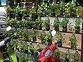 Bottled garden 01.jpg