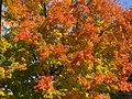 Bouquet of colors, Fall 2008 - panoramio.jpg
