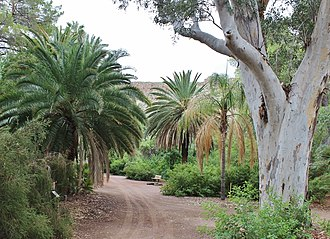 Boyce Thompson Arboretum State Park - A walking trail winds through groves of trees at the Boyce Thompson Arboretum.