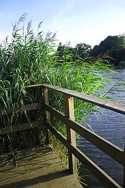 Bracknell mill pond - geograph.org.uk - 938058