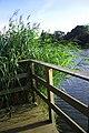 Bracknell mill pond - geograph.org.uk - 938058.jpg