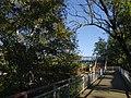 Bridge under birch.jpg