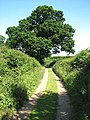 Bridleway to Ferry Road - geograph.org.uk - 1334196.jpg