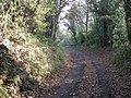 Bridleway to Little Wenlock - geograph.org.uk - 613492.jpg