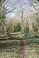 Bridleway to Old Shaftsbury Drove inside the trees - geograph.org.uk - 337049.jpg
