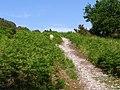 Bridleway up Dorridge Hill, New Forest - geograph.org.uk - 185105.jpg