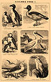 Brockhaus and Efron Encyclopedic Dictionary b46 786-1.jpg