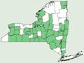 Bromus latiglumis NY-dist-map.png