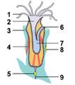 Bryozoa Anatomy tagged.png