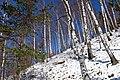 Brzozy zimą - panoramio.jpg