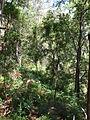 Budj Bim ‐ Mt Eccles National Park, Victoria, Australia 34.jpg