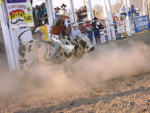 Somerset Region - Bull Riding at Toogoolawah Show