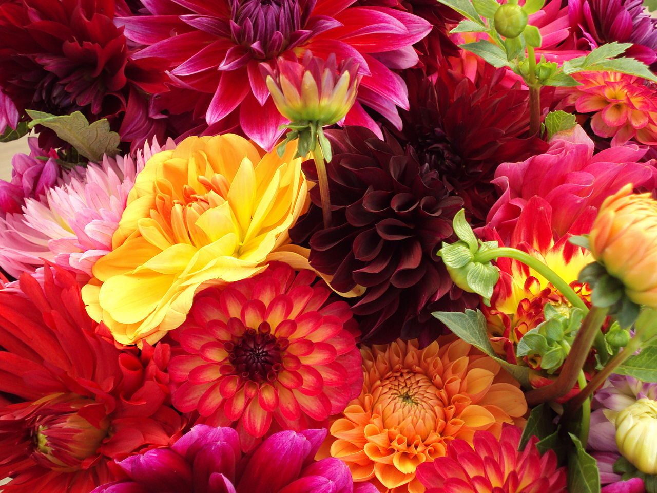 File Bunch Of Flowers Jpg Wikimedia Commons