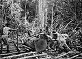 COLLECTIE TROPENMUSEUM Arbeiders takelen een boomstam op de rails om vervoerd te worden over het terrein van een houtkapperij van het Boschwezen TMnr 60051108.jpg