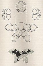 Cahill Butterfly Map.jpg