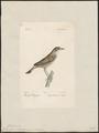 Calamodyta schoenoboenus - 1842-1848 - Print - Iconographia Zoologica - Special Collections University of Amsterdam - UBA01 IZ16200097.tif